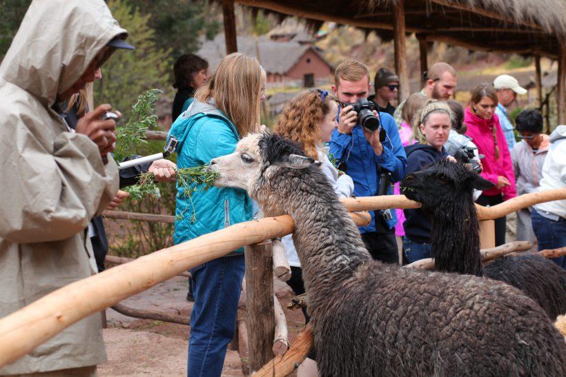 Cusco-LeadingTheWa