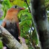 Orinoco-birding-002