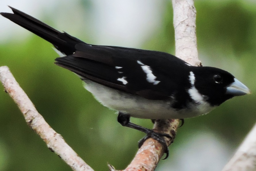 Orinoco-birding-004