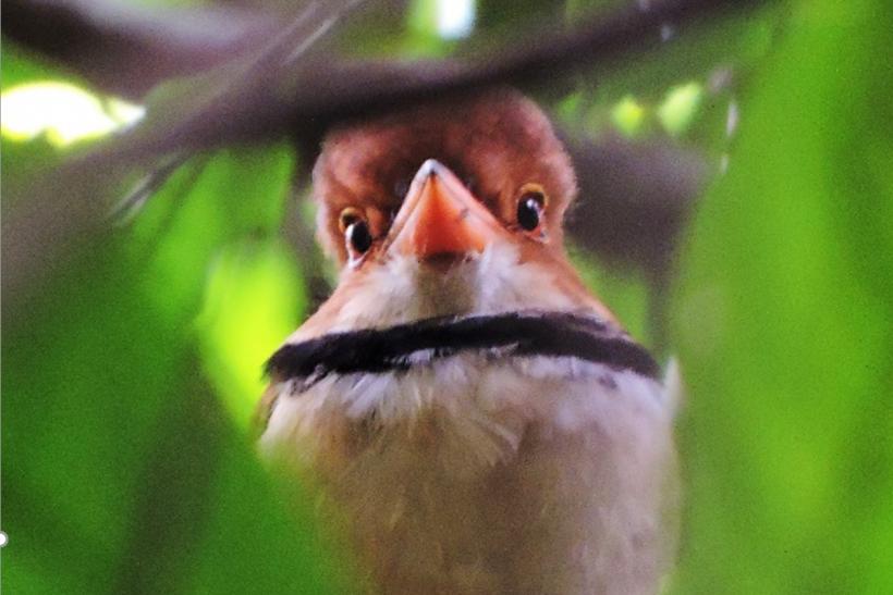 Orinoco-birding-007