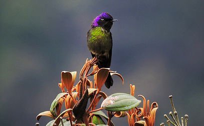 Colombia Highlands Birding-3224_2142_s_2