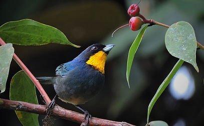 Colombia Highlands Birding-3735_2776_s_4_2