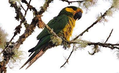 Colombia Highlands Birding-4244_2665_s_4_2