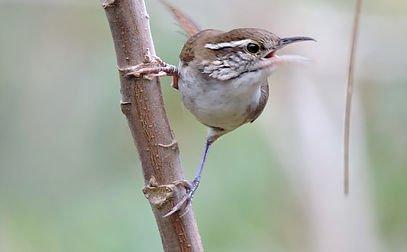 Colombia Highlands Birding-4608_3456_s_4_4