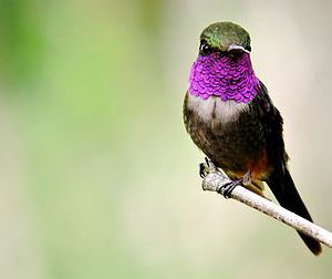 Colombia Highlands Birding