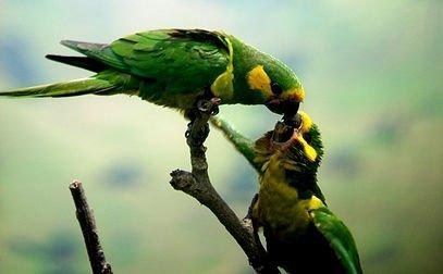 Colombia Highlands Birding